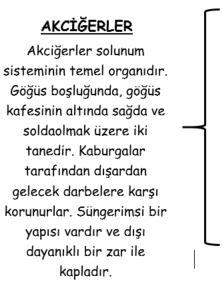 akciger