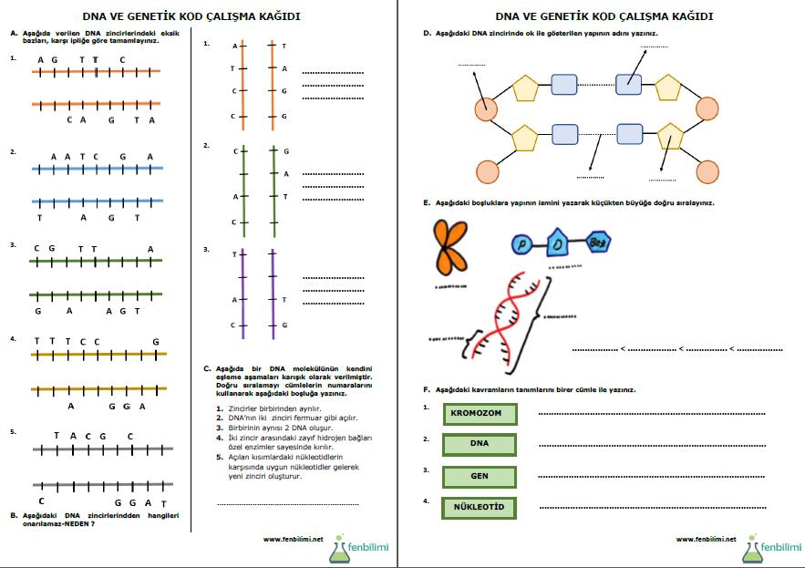 Dna Ve Genetik Kod Calisma Kagidi Fenbilimi