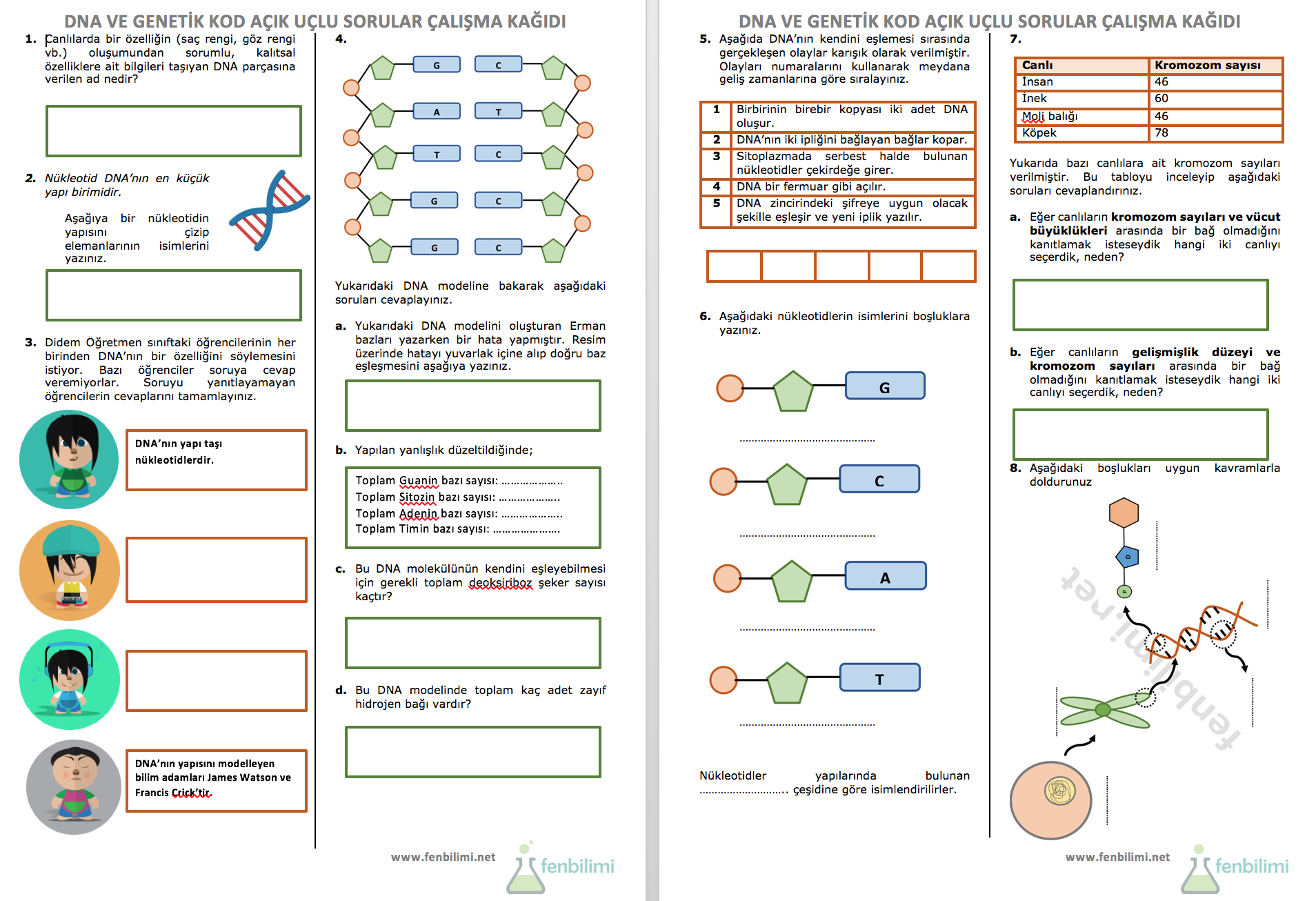 Dna Ve Genetik Kod Acik Uclu Sorular Calisma Kagidi Fenbilimi