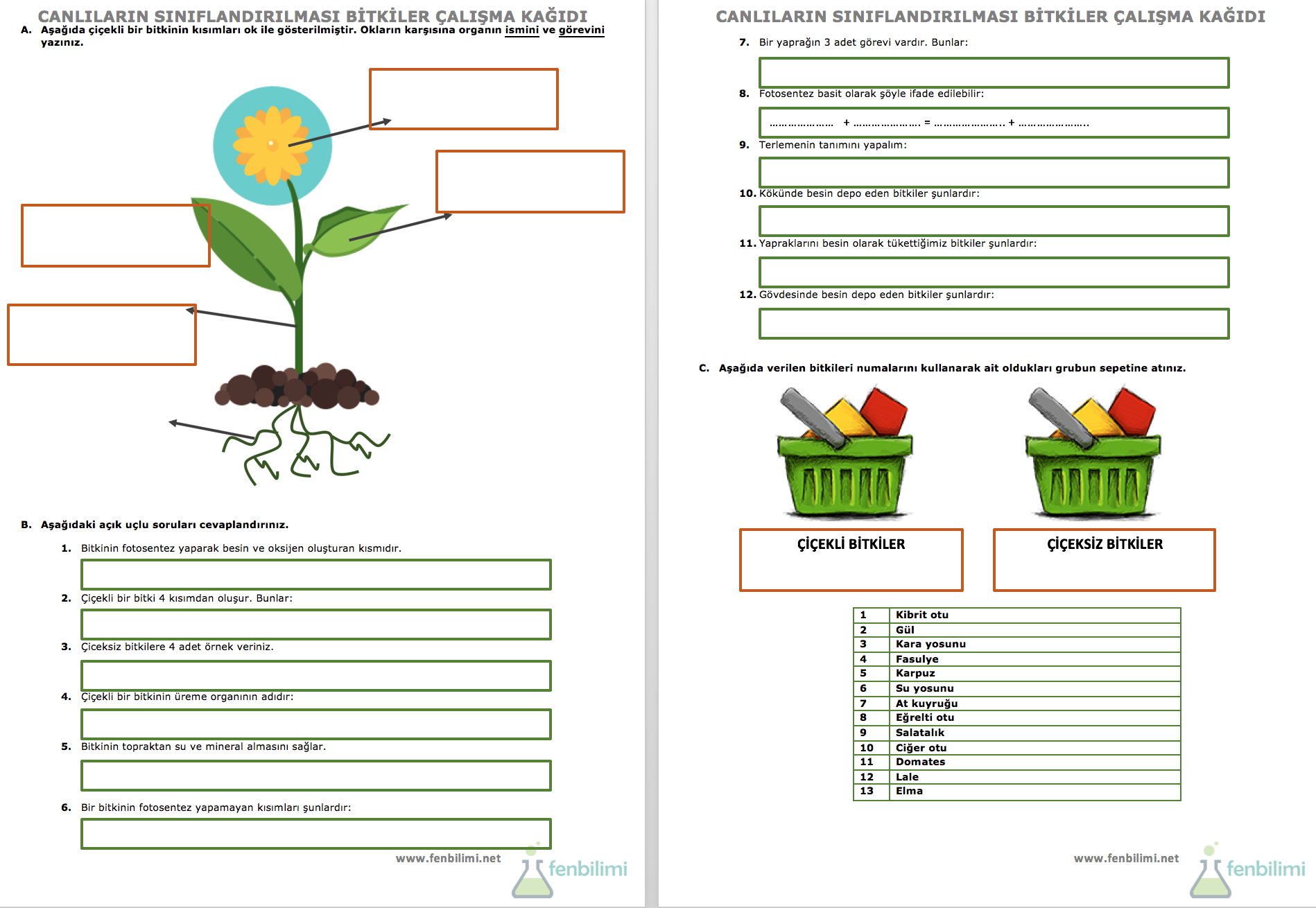 Canlilarin Siniflandirilmasi Bitkiler Calisma Kagidi Fenbilimi