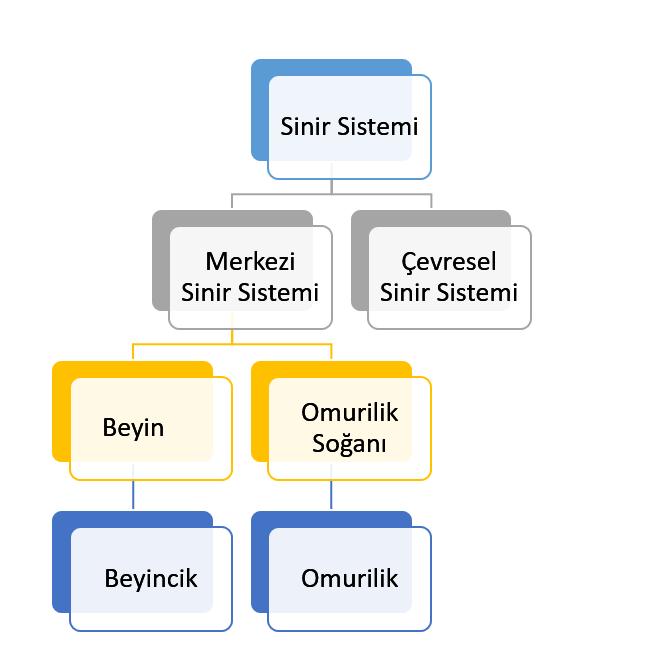 Düzenleyici ve denetleyici sistem